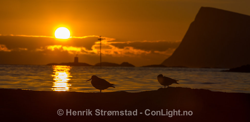 130526-Troms-0905.jpg