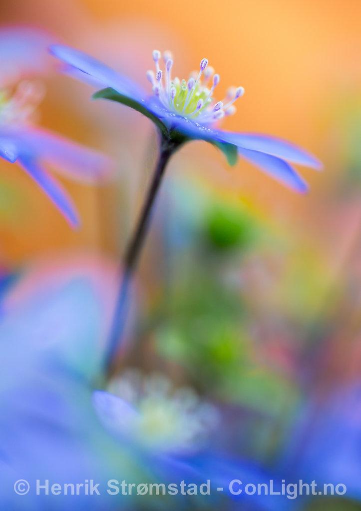 130519-Blomster-0004-Edit.jpg