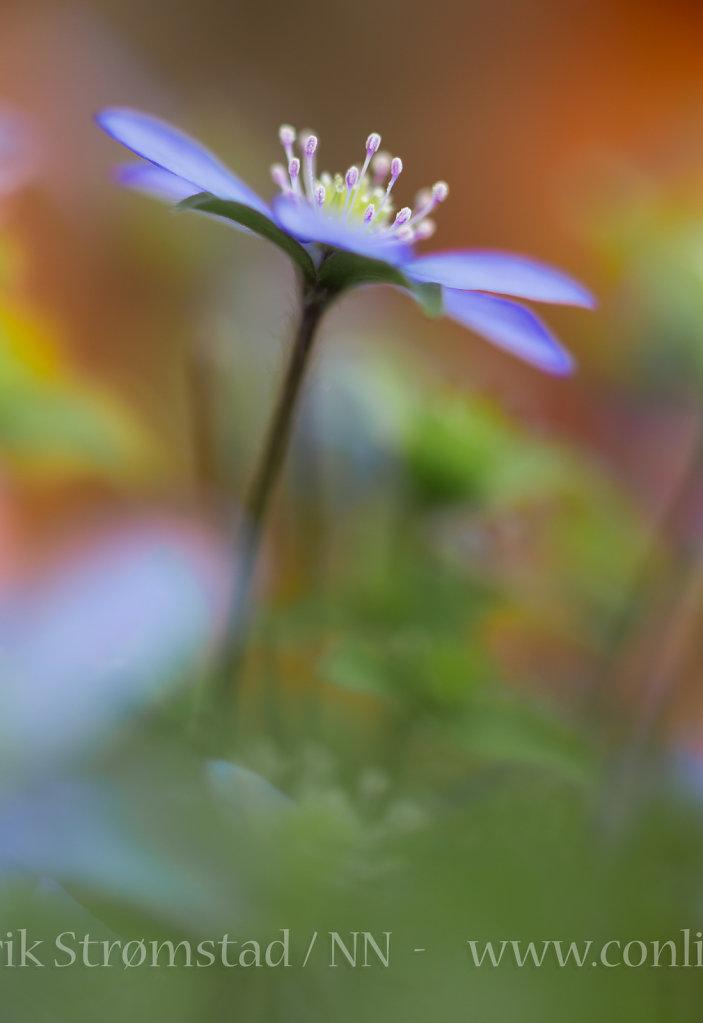 130519-Blomster-0015-Edit.jpg