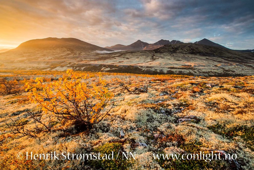 160917-Rondane-0877.jpg