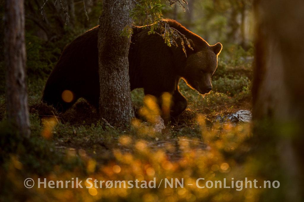 180904-Bjorn-Forest-0151.jpg